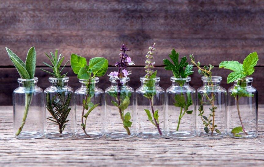 essential herb plants in bottles