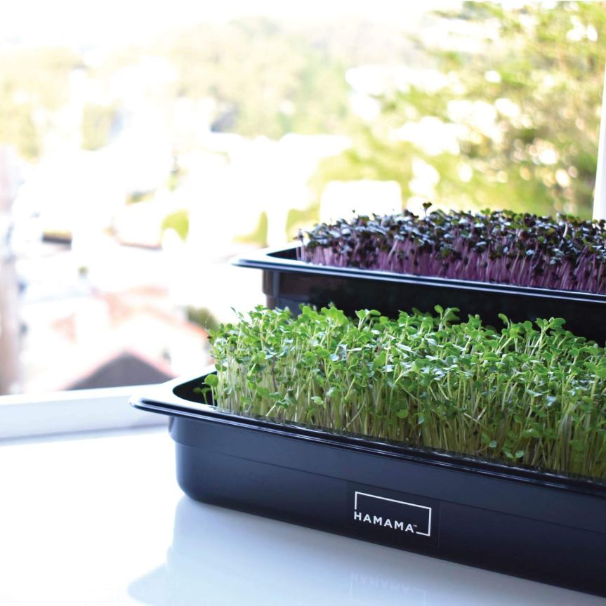 Why Grow Microgreens and Micro Herbs Yourself?