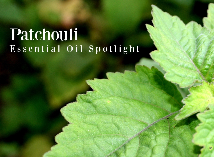 Patchouli-Essential-Oil-Spotlight