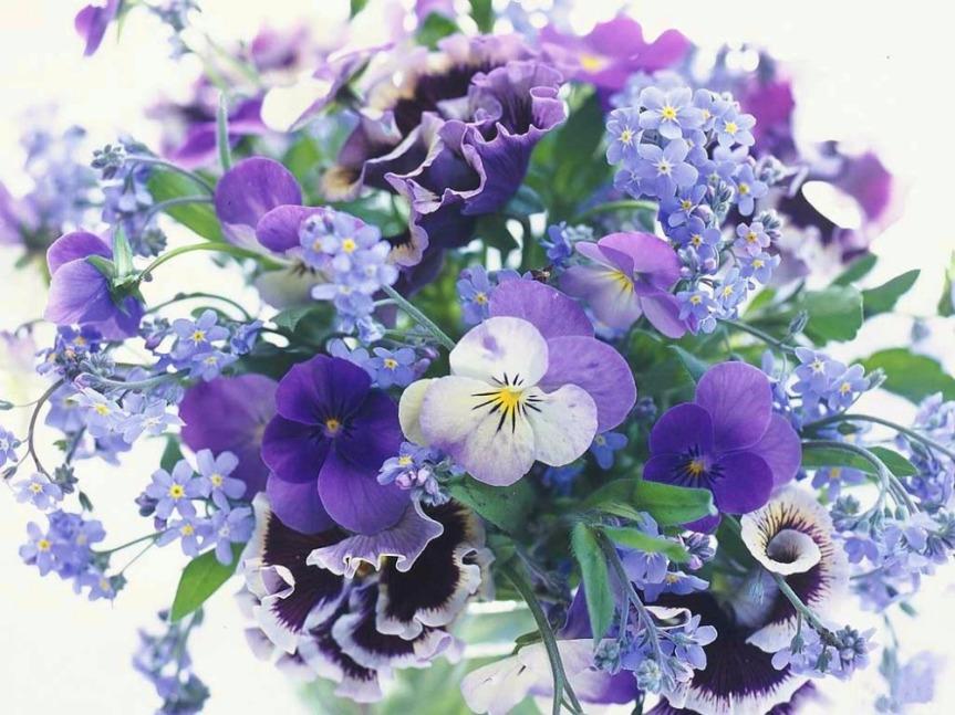 violets lrg