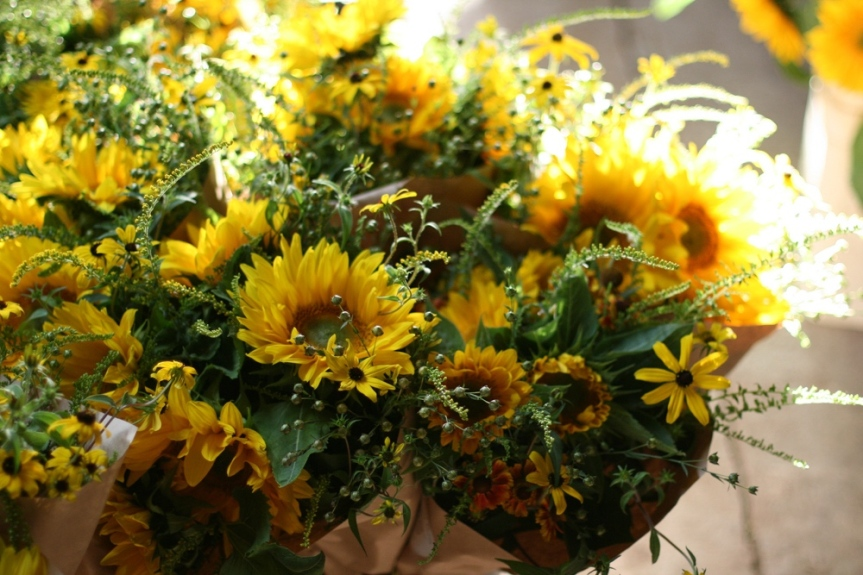 Favorite Sunflowers for Cutting – Floret Flowers